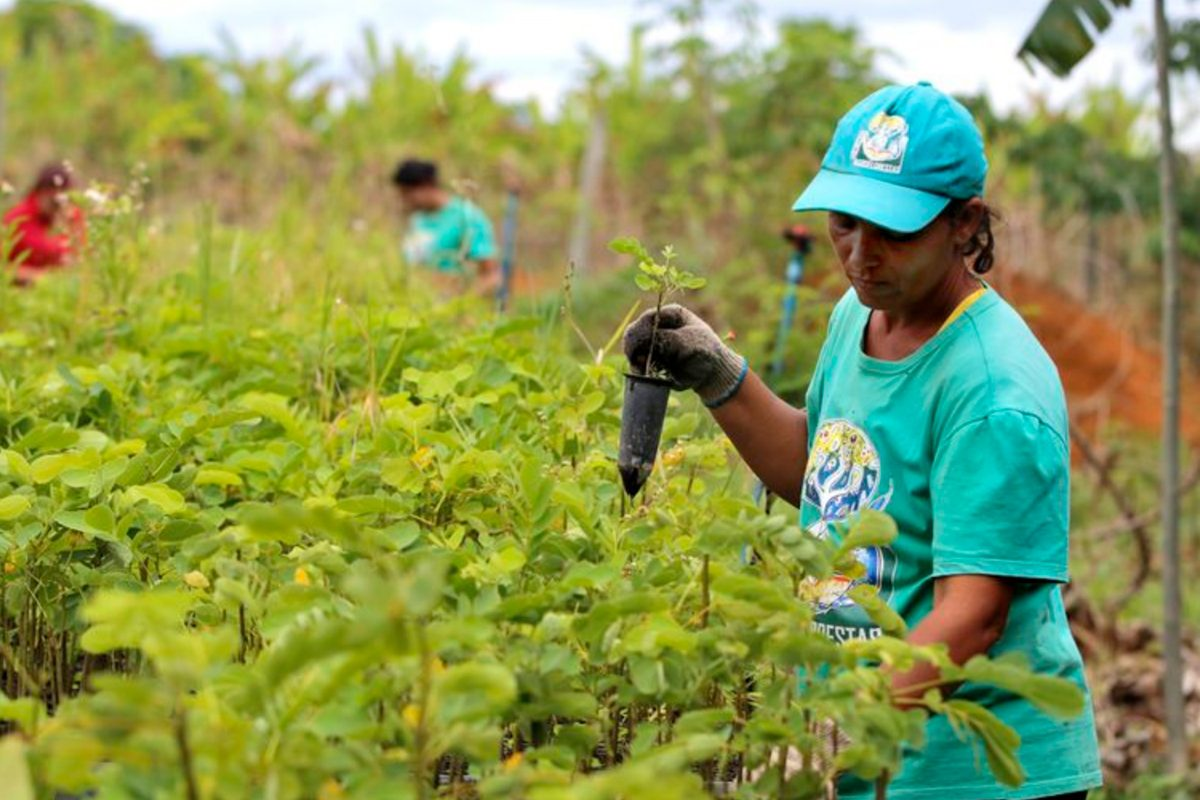 Brazil's Landless Workers Persist through Agroecology