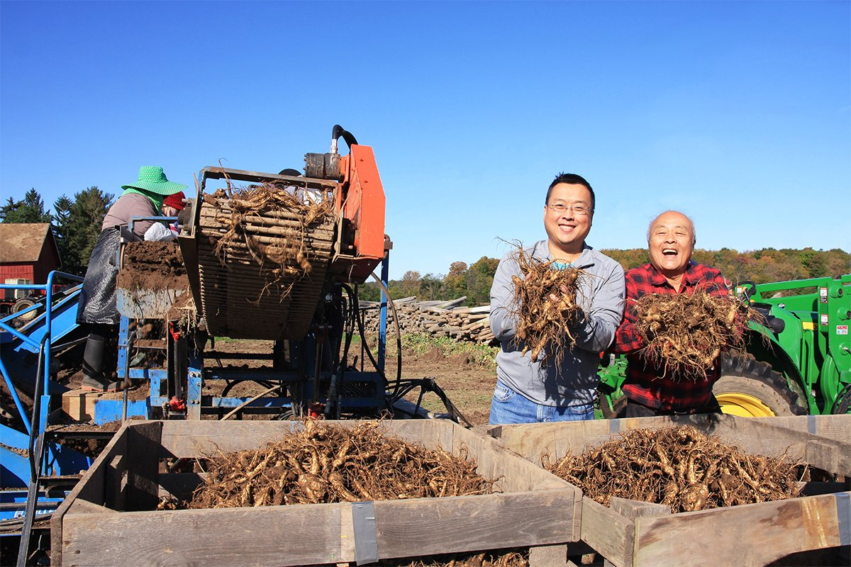 Will Hsu (left), with his father Paul, harvesting Ginseng. (Photo courtesy of Hsu Ginseng Enterprise)