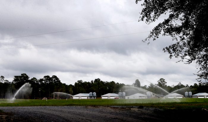 "Industrial swine farms periodically apply hog waste to ""sprayfields"" of feed crops with high-pressure guns to prevent the waste lagoons from overflowing. (Photo credit: Waterkeeper Alliance)"