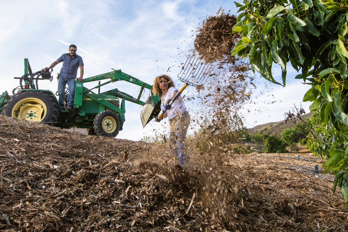 Martha Romero guides husband Salvador Prieto as he drives and dumps a load of mulch at their Hass avocado trees in Somis, California. (USDA Photo by Lance Cheung)