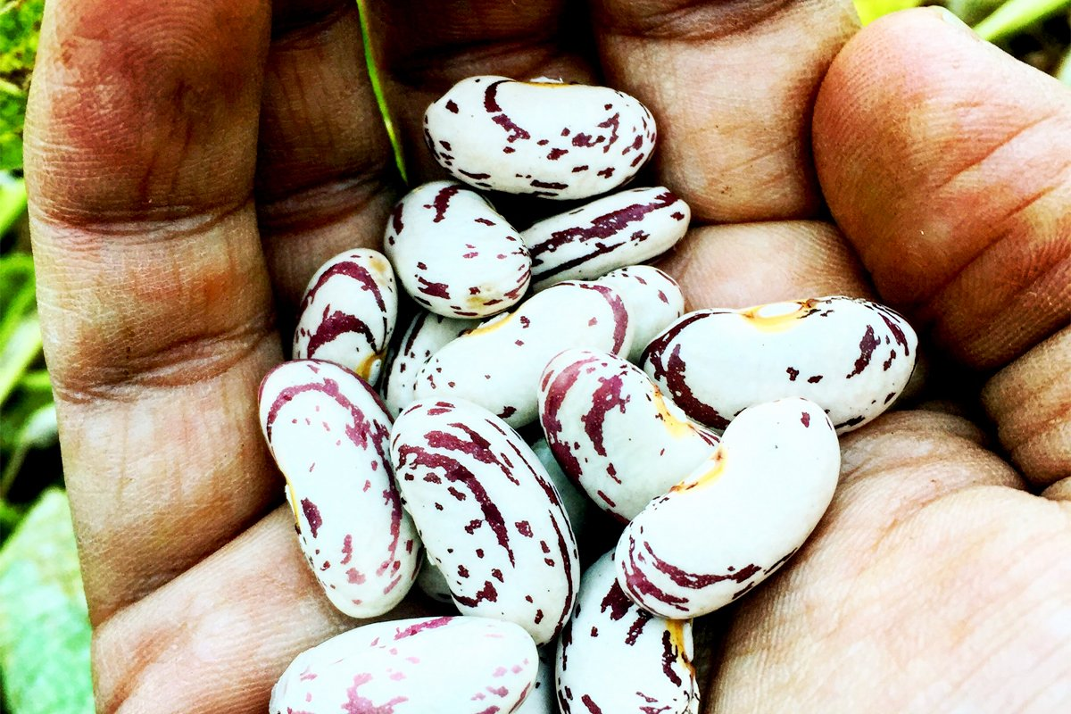 A hand holding native seeds. Photo courtesy of Rowen White