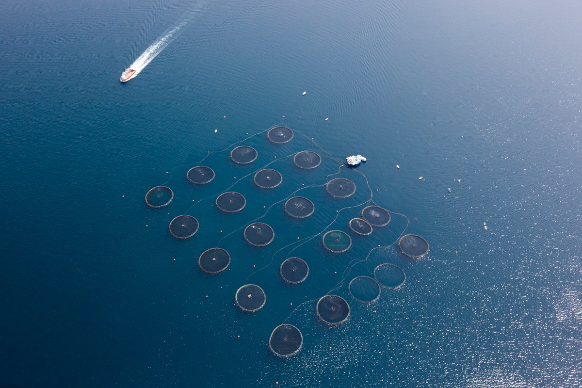 overhead view of a salmon farm aquaculture operation in norway
