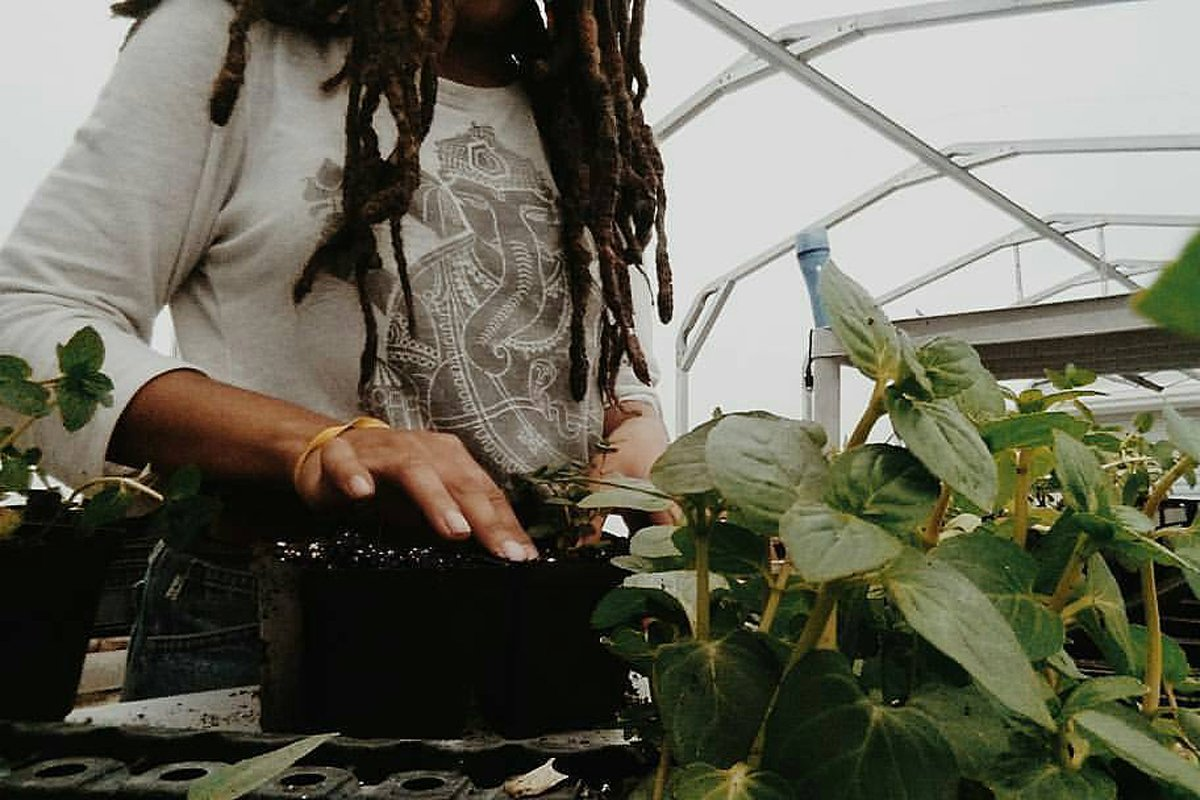 A Black farmer in a greenhouse growing crops to plant in the soil. Photo courtesy of Amber Tamm Canty.