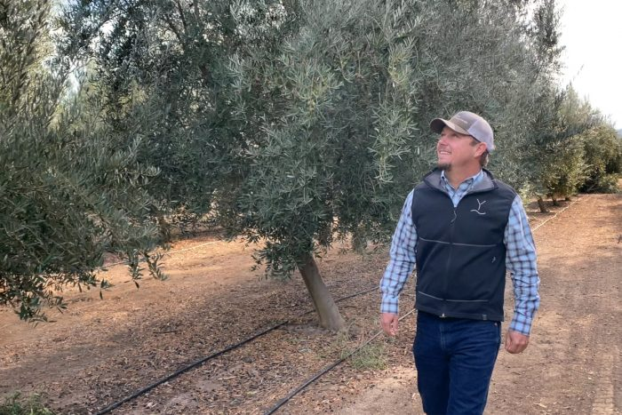 Jim Etters walks through the olive groves inspecting the Yocha Dehe Wintun Nation's farmland.