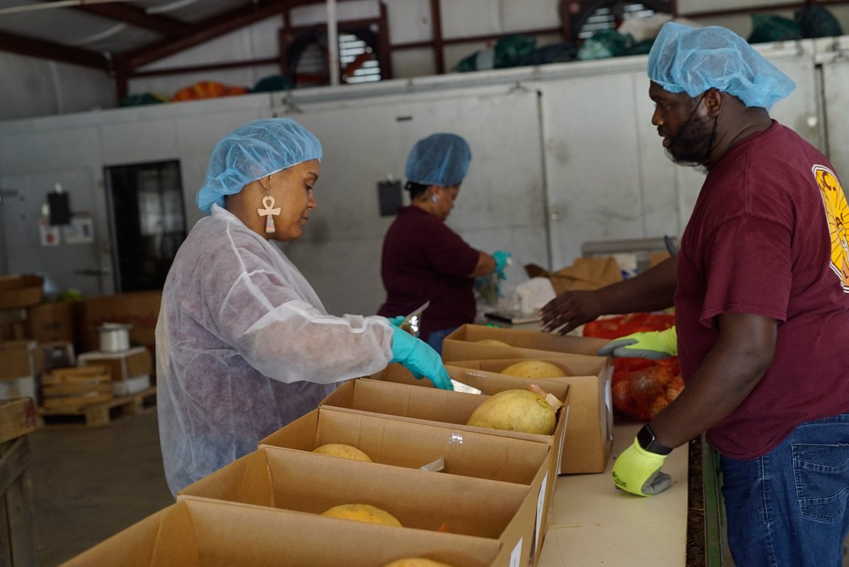 Indian Springs Farmers Cooperative workers packing food boxes for the Federation's contract