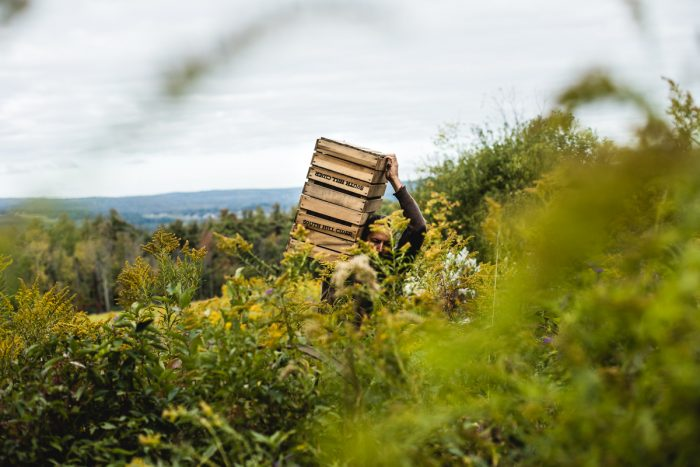 Steve Selin carries harvesting materials to gather wild apples.