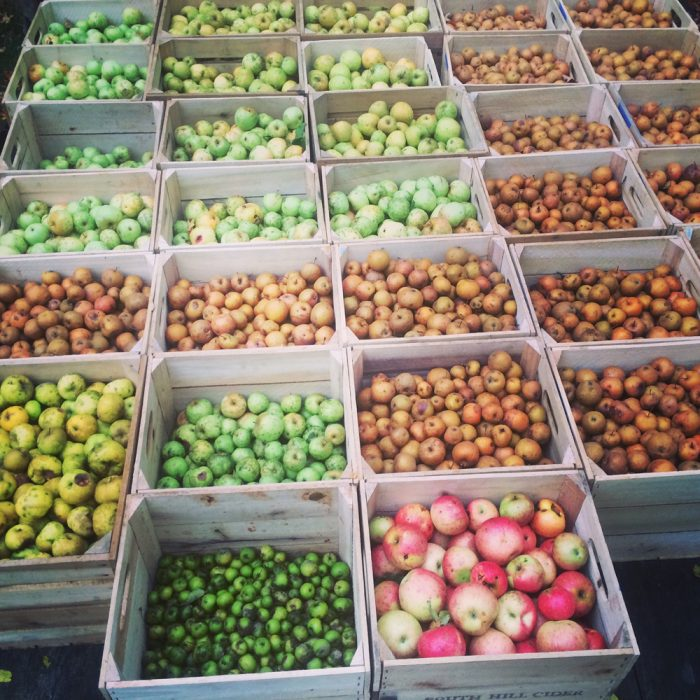 Some of South Hill Cider's apple harvest. (Photo credit: South Hill Cider)