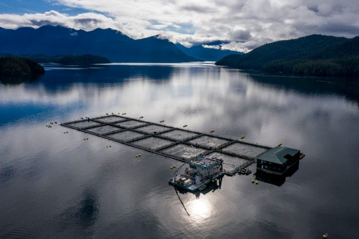 A Cermaq fish farm in Ahousaht First Nation's tradiotional territory at Saranac Island in Clayoqout Sound.
