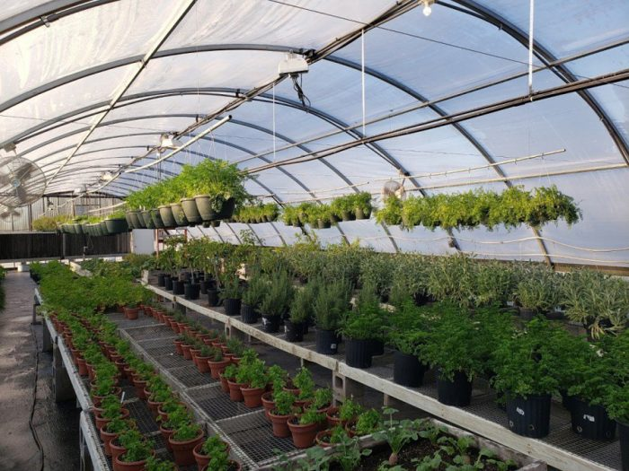 With seven greenhouses and two gardens, the Quapaw gardeners harvest about 6,000 pounds of food per year. Each morning, the resort's chefs stop by and place their orders. Photo courtesy Downstream Casino Resort