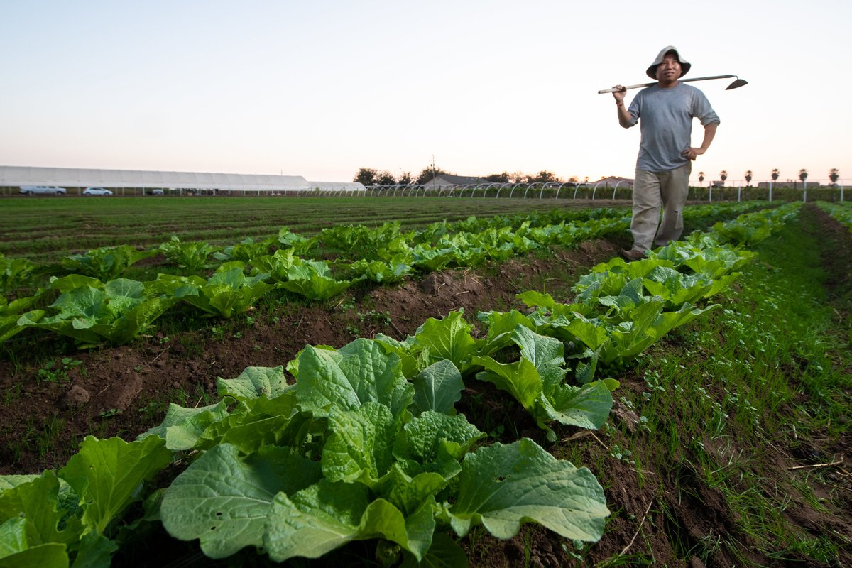 Vue Her, a Hmong farmer outside Fresno, California. USDA Photo by Lance Cheung