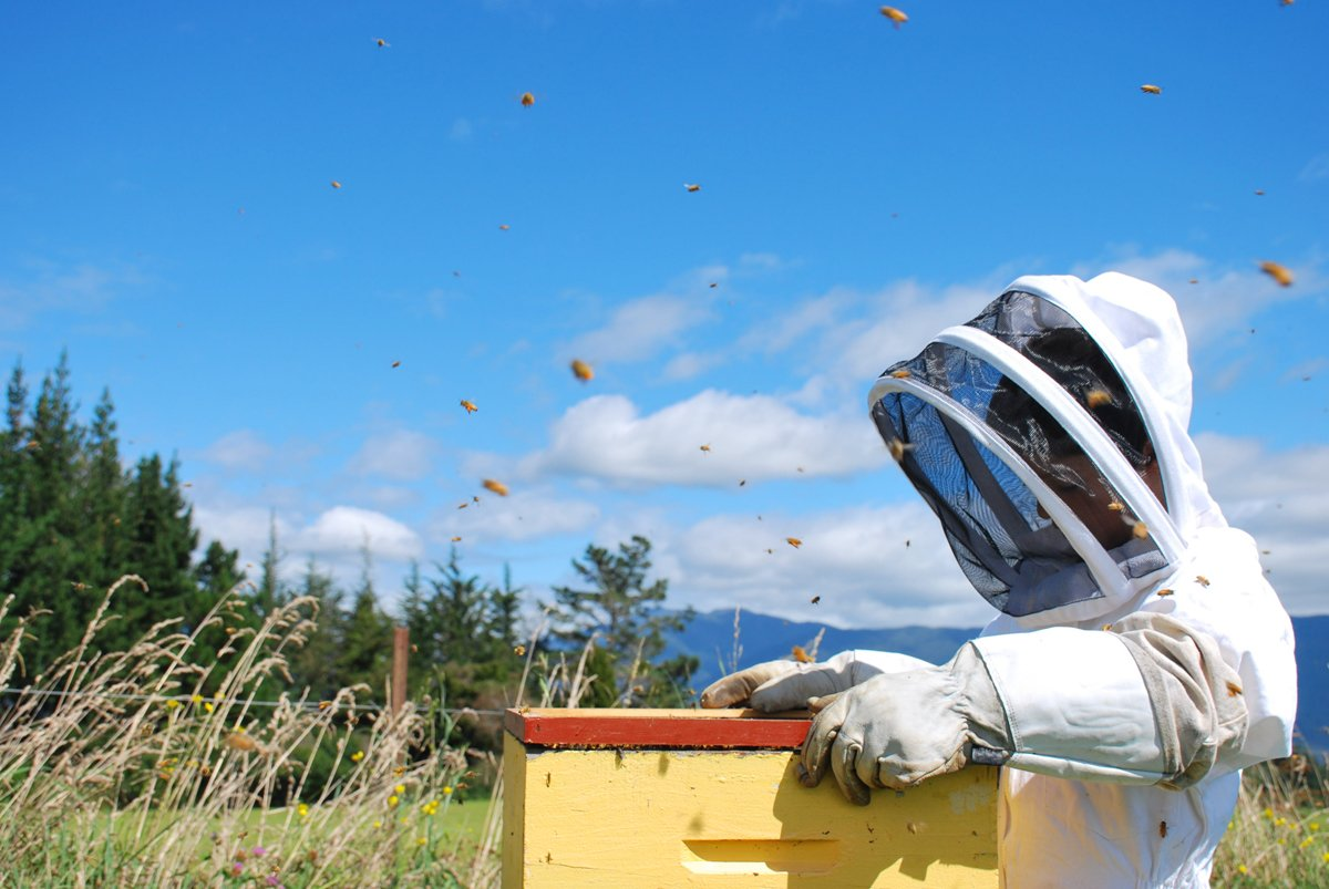 beekeeper releasing bees in a farm field, which is no doubt littered with neonicotinoid pesticides