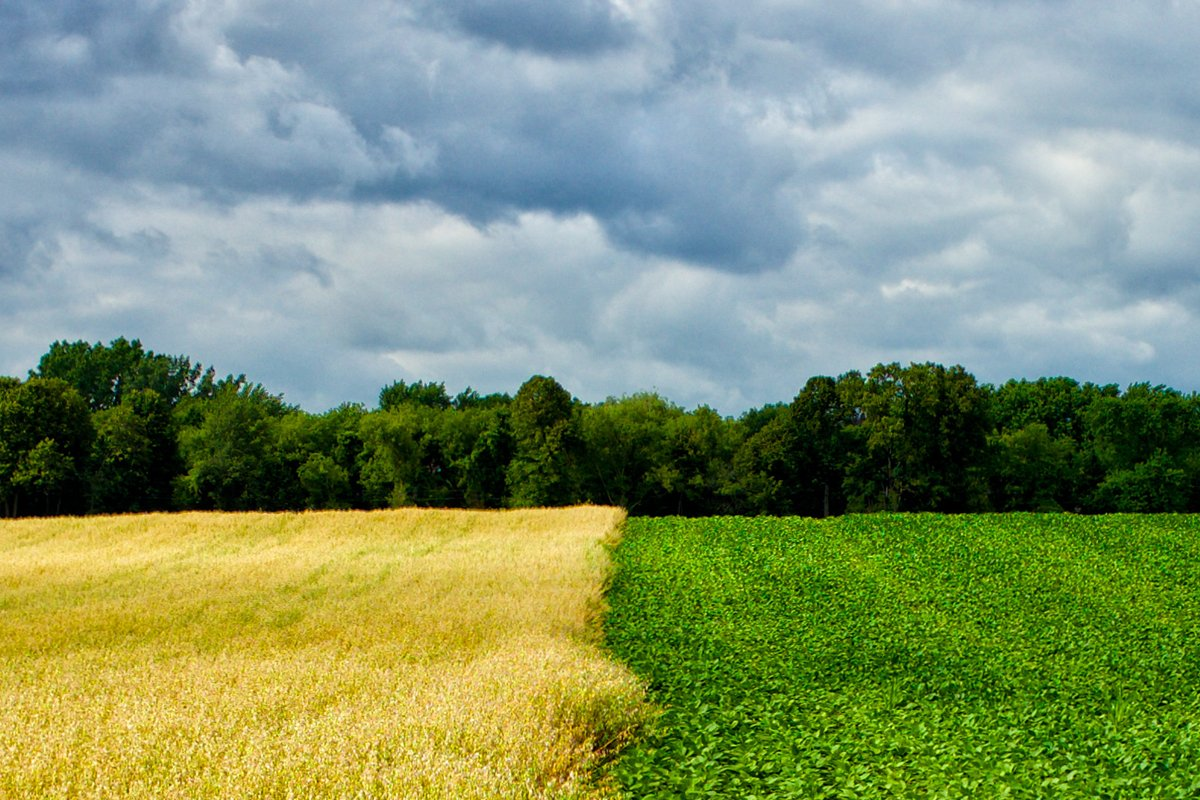 A field of oats and soybeans. Photo CC-licensed by Elvis Kennedy.