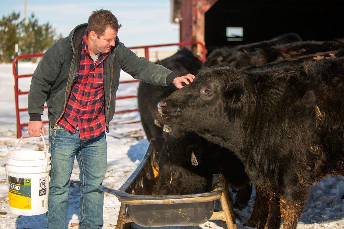 Drew DeSutter tends to the cows on the family farm in New Windsor, Illinois. (Photo credit: Steve Davis for The Midwest Center for Investigative Reporting)