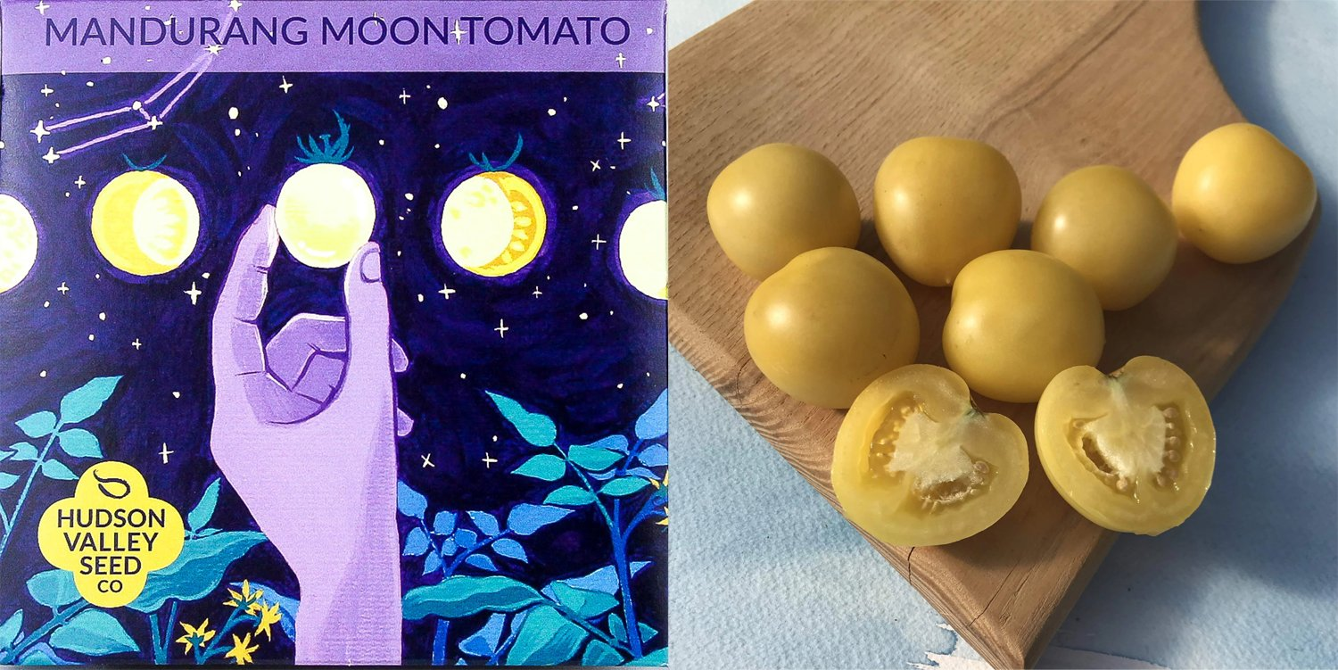 Mandurang Moon Tomato art pack and tomatoes photo