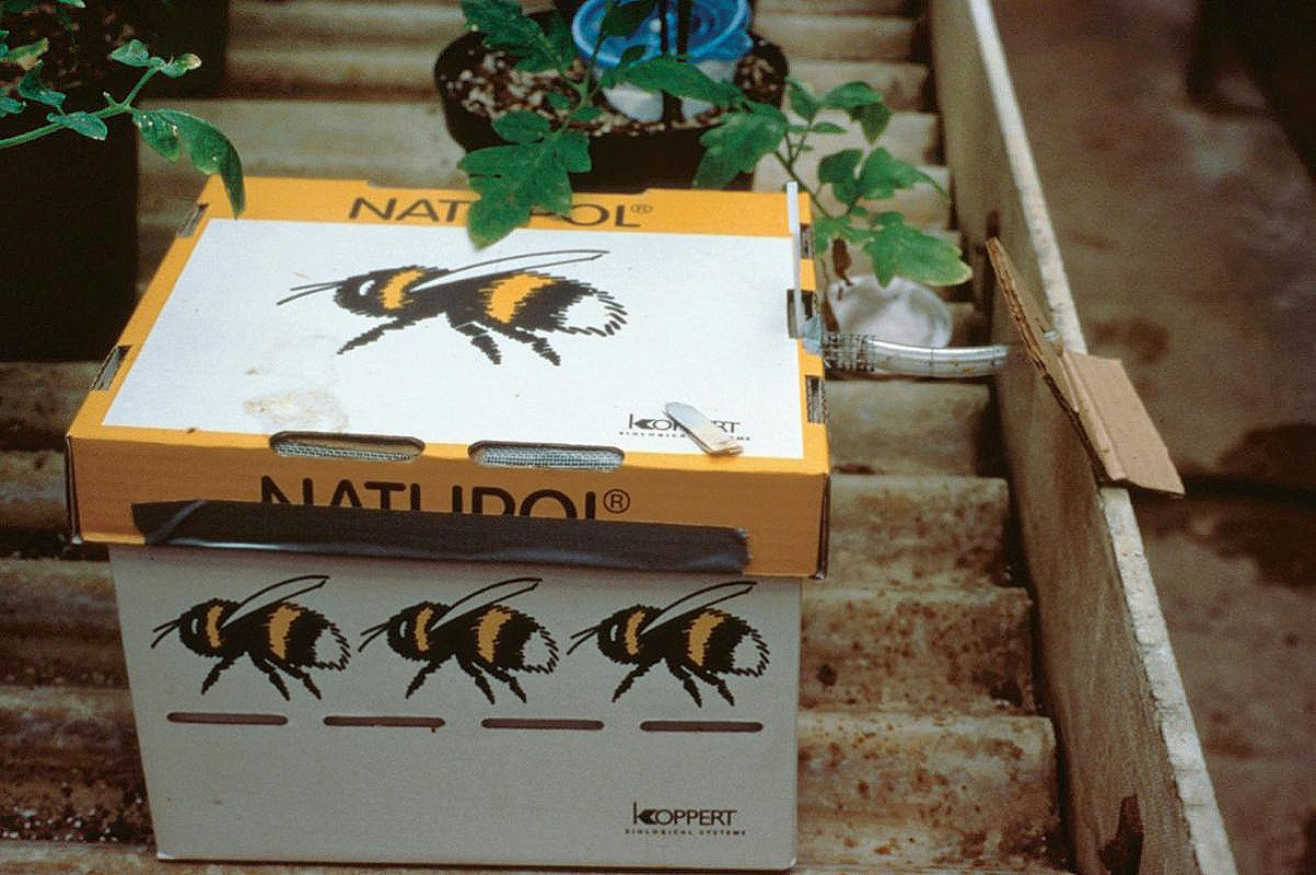 A box of commercial bumble bees from Koppert. (Photo courtesy of Elaine Evans)