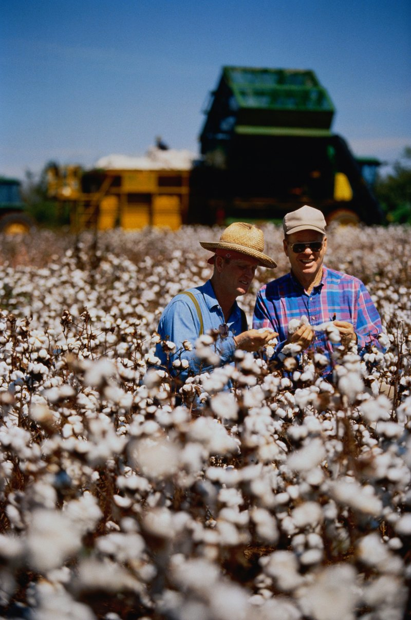 Two farmers standing amongst their organic cotton plants