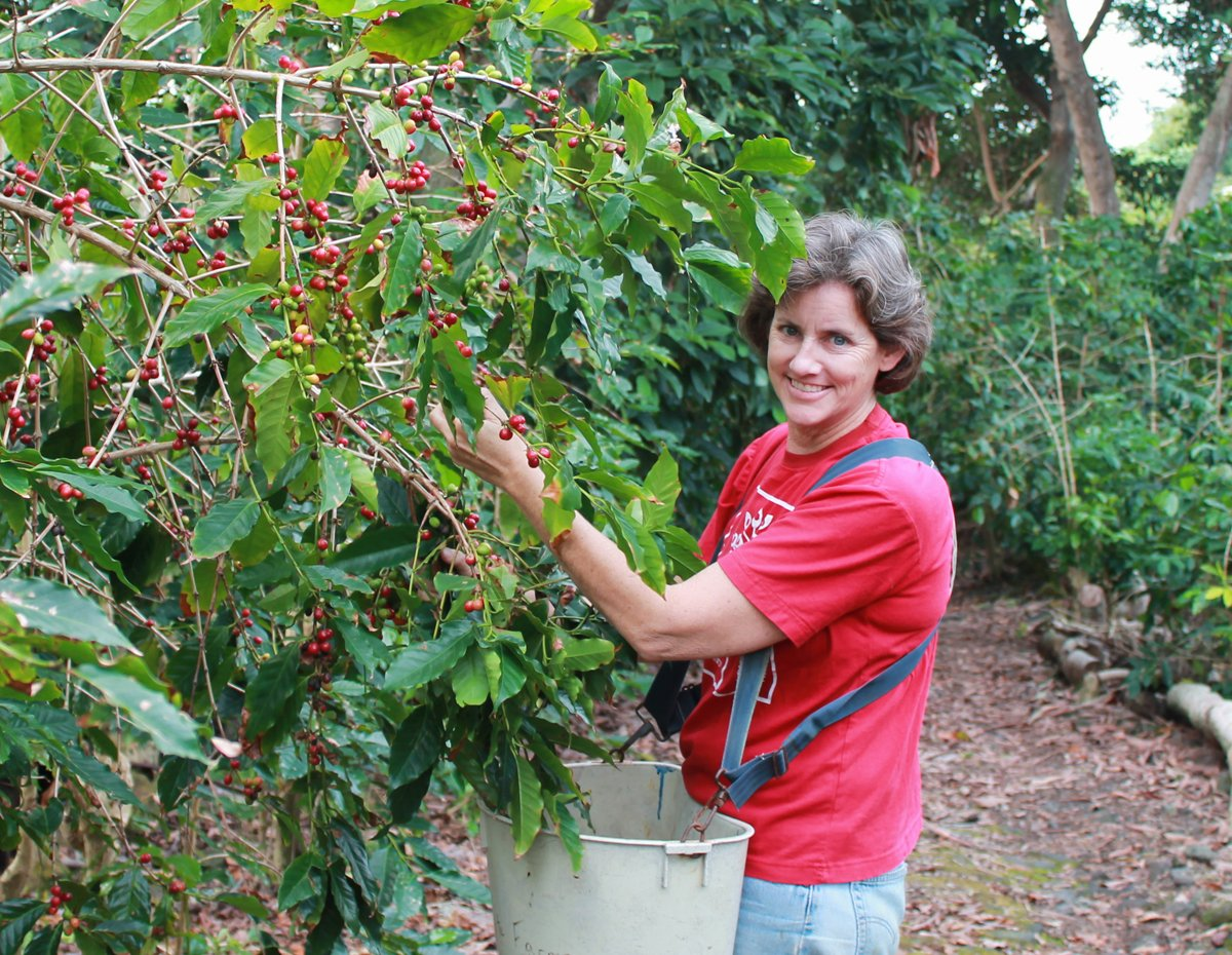 Suzanne Shriner harvesting coffee. (Photo courtesy of Suzanne Shriner)