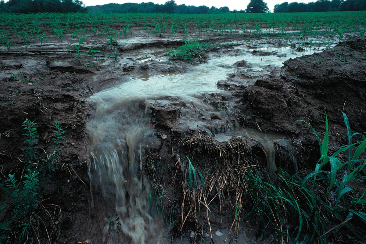 Water runs off a farm in Iowa. (Photo credit: Lynn Betts / NRCS)