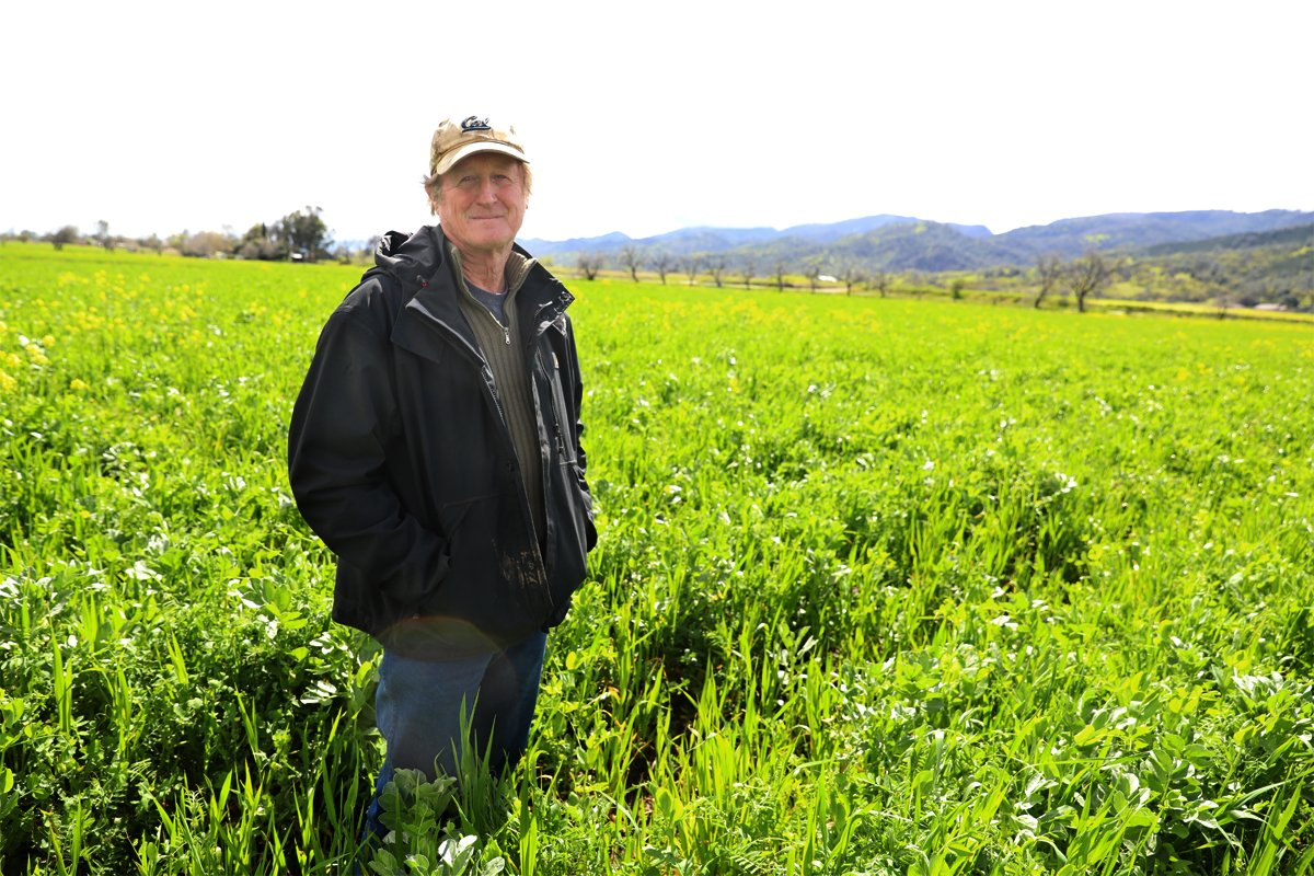 Paul Muller standing in his cover-cropped field. (Photo courtesy of the Chico State Center for Regenerative Agriculture)