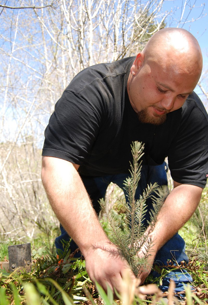 Dwayne Davis, a Yurok Fisheries Department watershed restorationist, planted hundreds of trees for a salmon habitat restoration project on the lower Klamath River. (Photo courtesy of Matt Mais/Yurok Tribe)