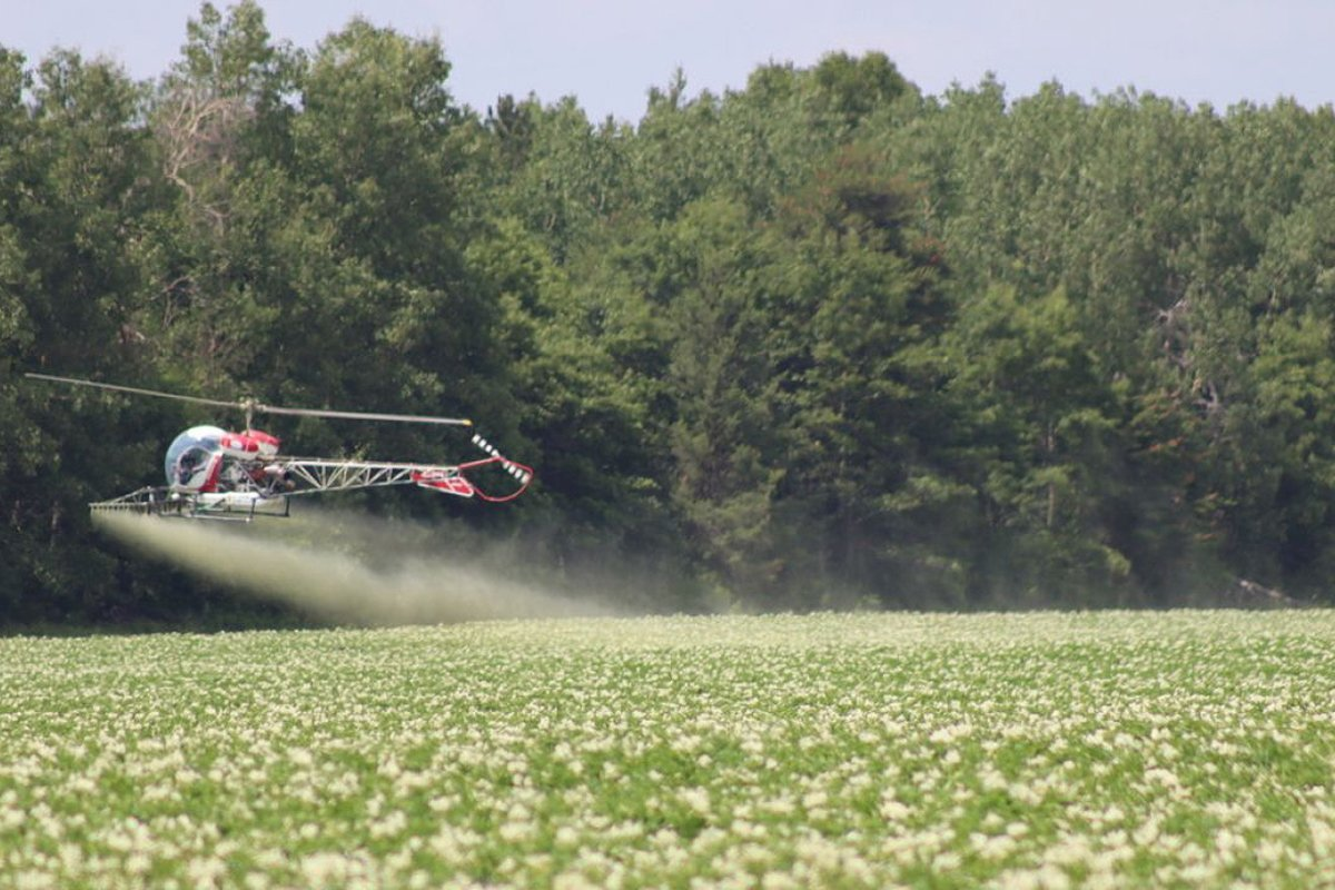 A helicopter sprays pesticides on a potato field owned by RD Offutt in Minnesota's Pineland Sands region. (Photo credit: EWG)