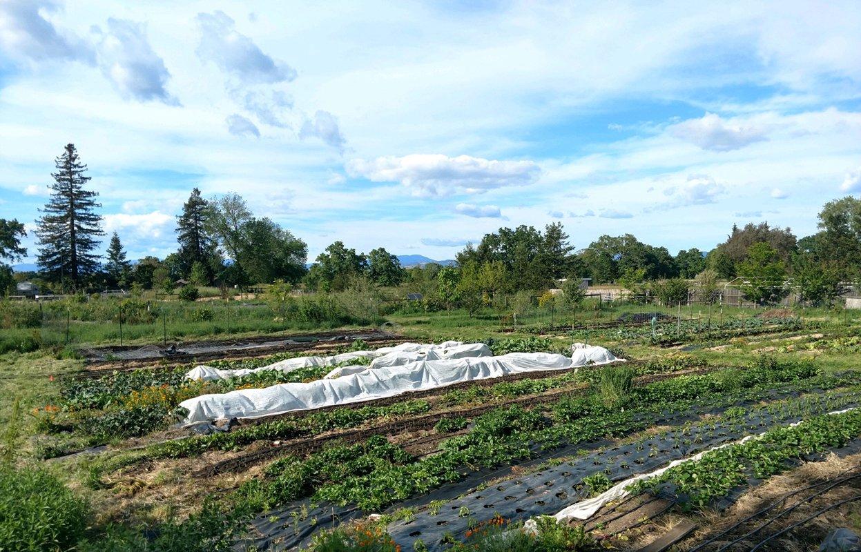 Red H Farm.