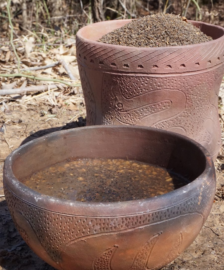 Pictured are both lambsquarter/ goosefoot seeds and stew. The beaker in the back contains the raw seeds. The bowl in the front contains a stew made from the seeds, hickory nuts, and stew meat. Archaeological evidence suggests that this was the staple dish in the American heartland 2,000 years ago. (Photo courtesy of Ian Thompson)