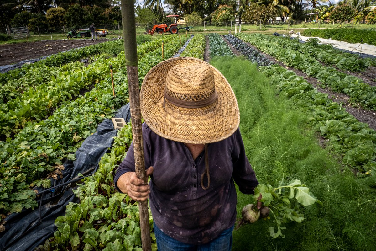 a farmer stands in a diversified farm growing organic produce.