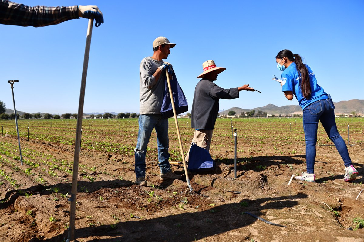 farmworkers talk to a covid workplace safety protection worker in california. (Photo by Mario Tama/Getty Images)