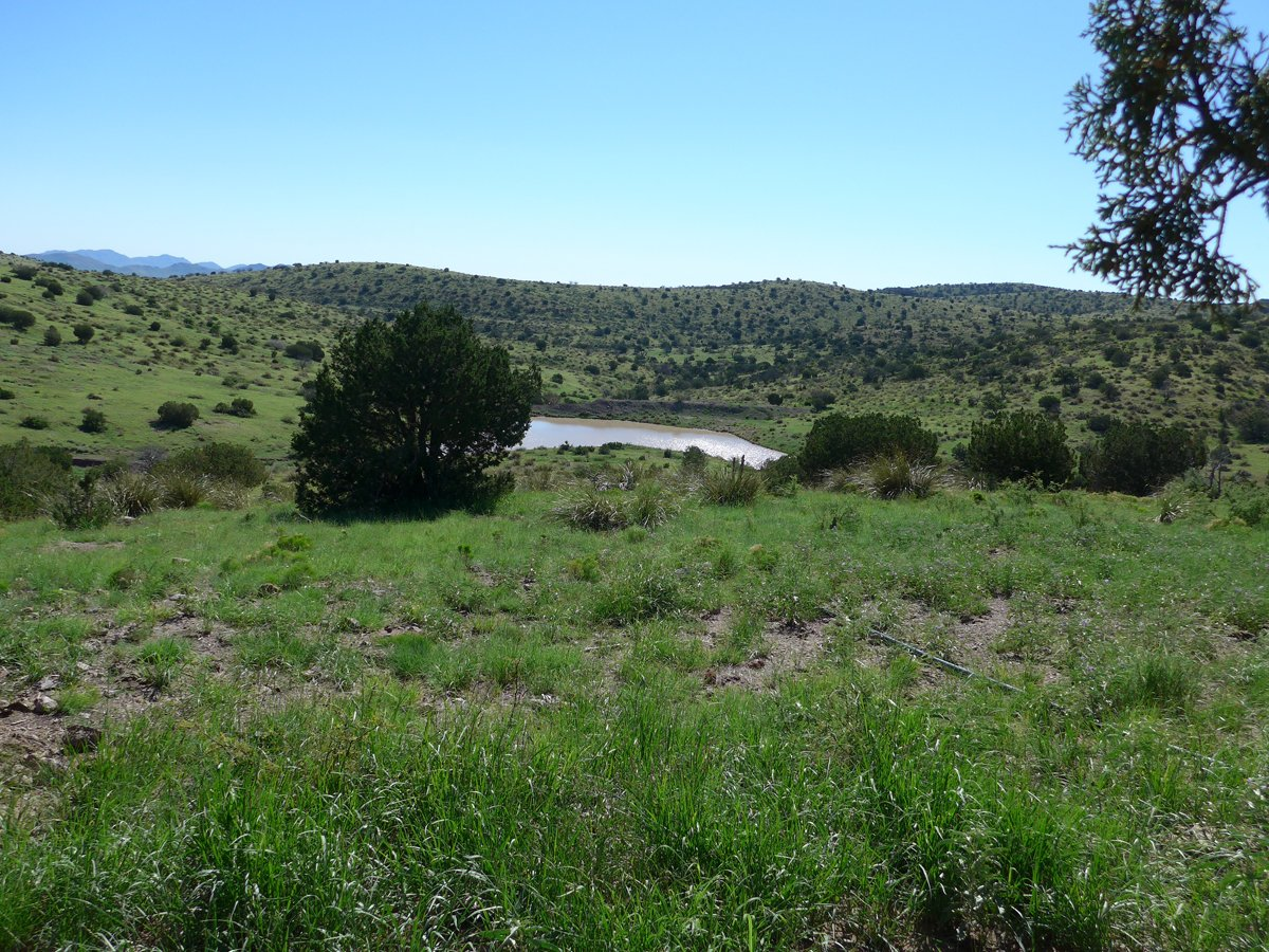 Green grazing lands in Rodeo, New Mexico. (Photo credit: Rich Winkler, Malpai Borderlands Group)