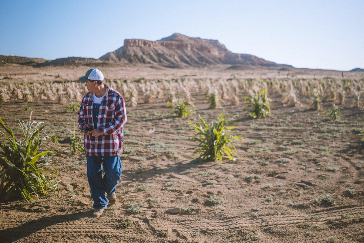 Michael Kottuwa Johnson walks among the Hopi corn field. (Photo credit: Costa Boutsikaris)