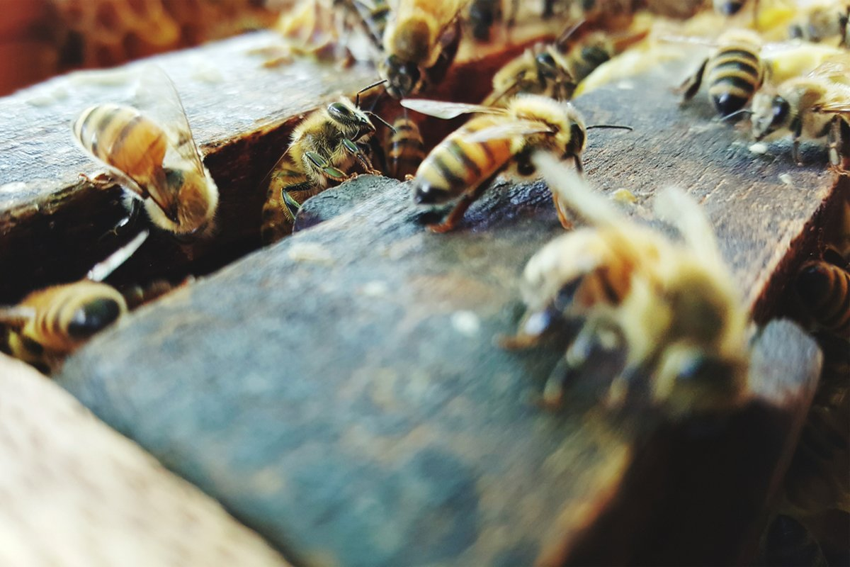 bees are crawling around a hive and trying to steer clear of pollinator-killing neonic pesticides