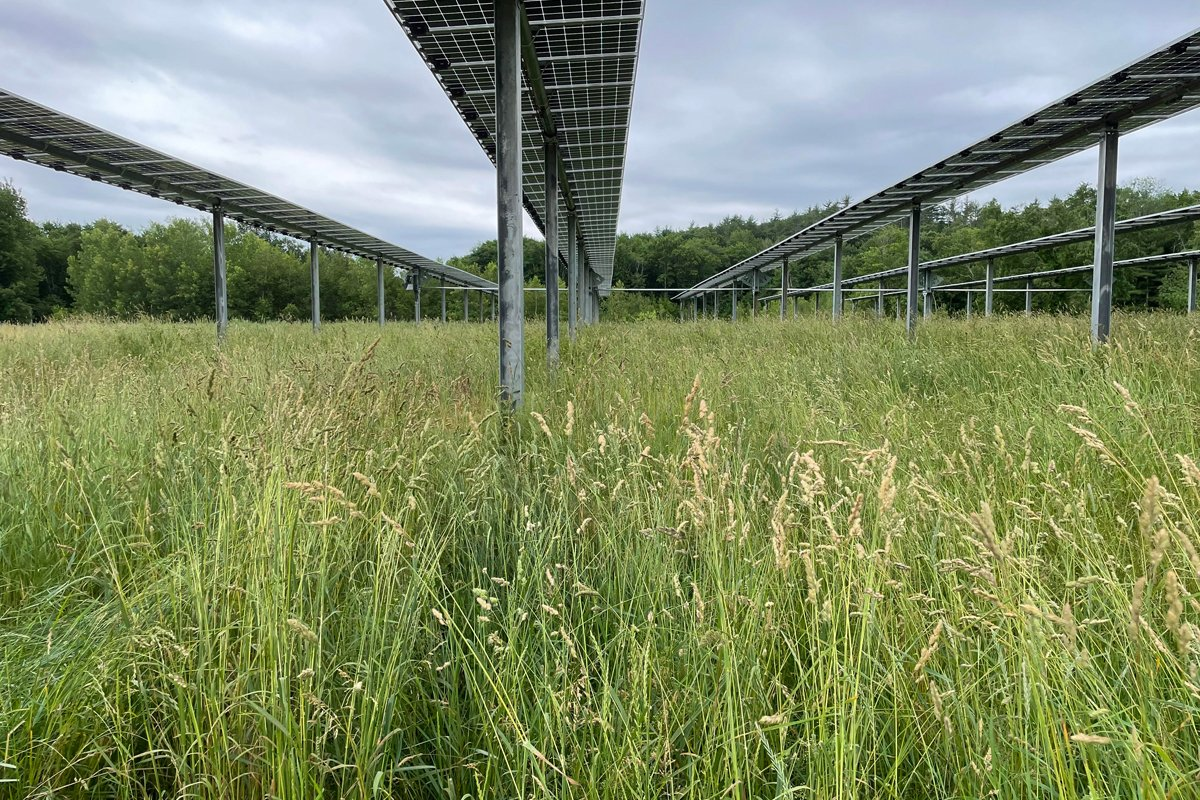 The dual-use solar array on Nate Tassinari's farm in Monson, Massachusetts. (Photo courtesy of Nate Tassinari)