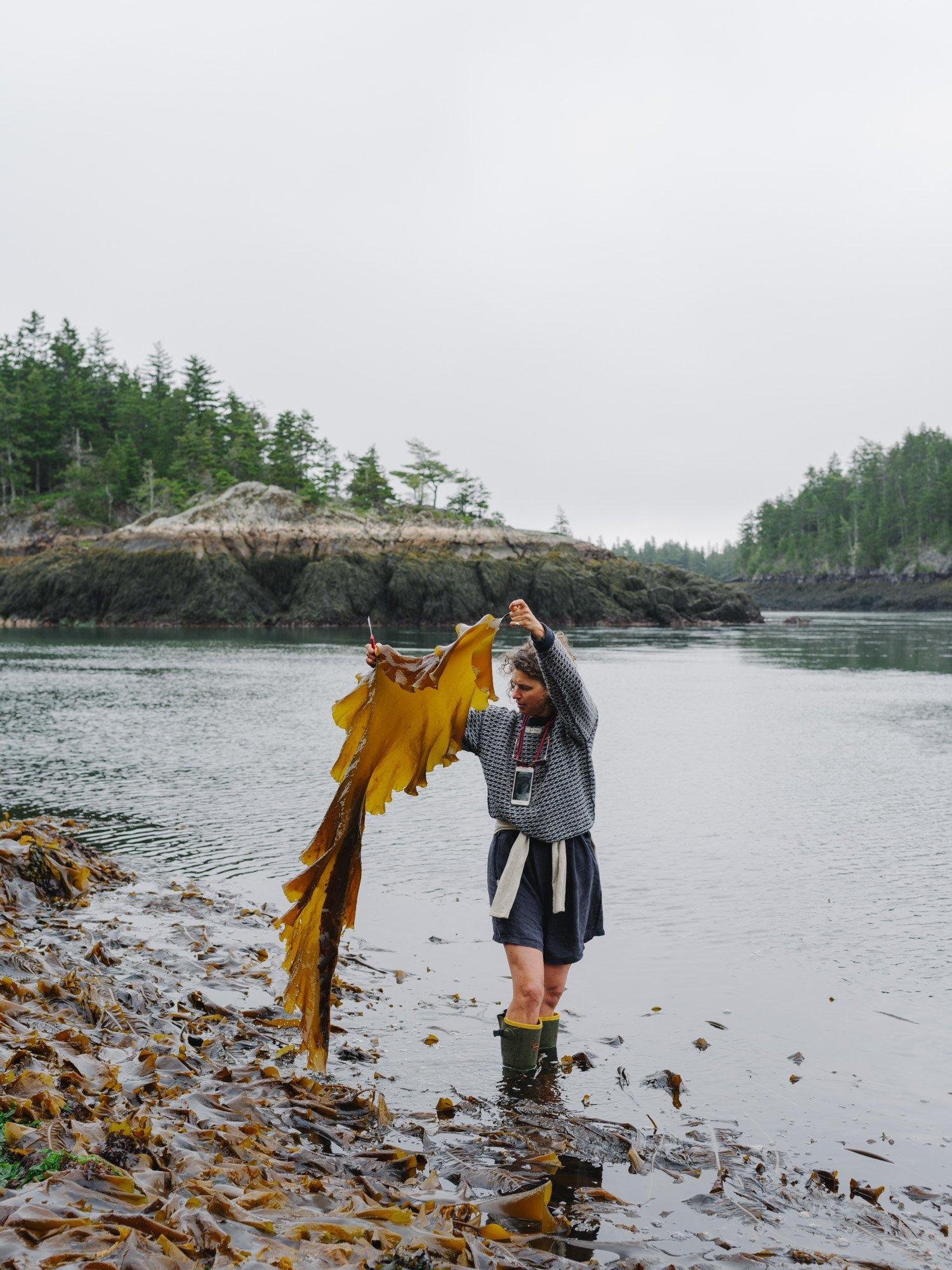 Kelp_harvesting_Severine_James_Jackman