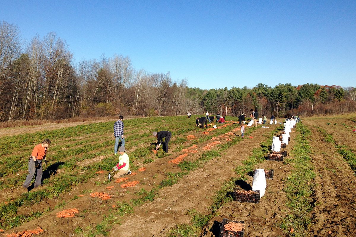 Gleaners at Salvation Farms in Morristown, Vermont. (Photo from Salvation Farms)