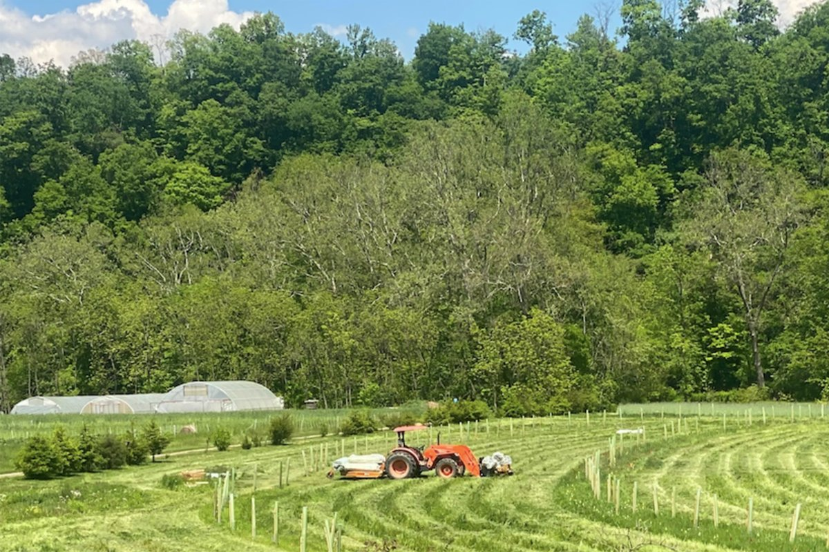 A new multifunctional riparian buffer planting at Village Acres Farm in Mifflintown, Pennsylvania. They planted a combination of silvopasture-supporting trees, high-shade trees near the water, and underplantings that can be used by florists or harvested for profitable crops. (Image courtesy of Angela Brubaker)