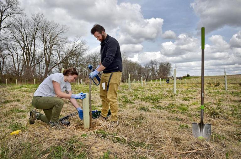 Pennsylvania DCNR staff work together to plant a shrub within a riparian forest buffer, and install a shelter and stake to protect the young shrub as it begins to grow. (Image courtesy of DCNR)