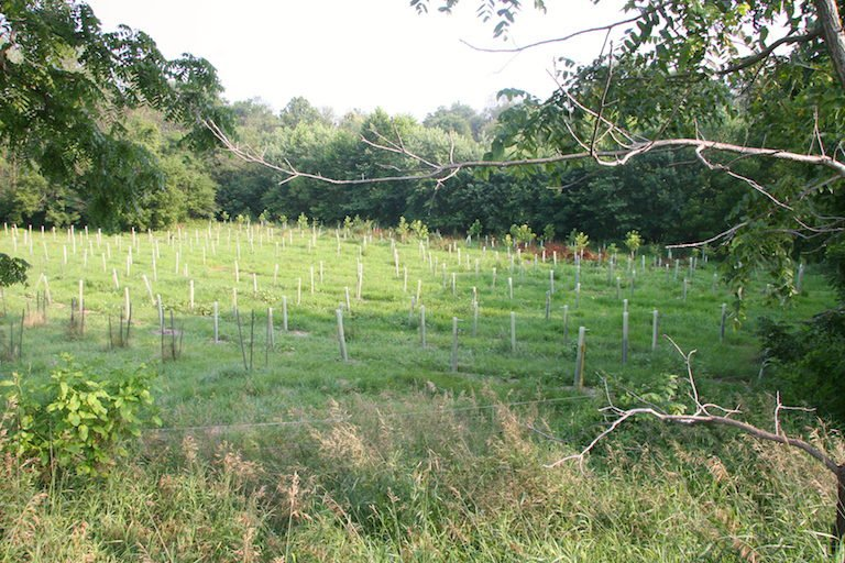A buffer planted on Dickinson College in Boiling Springs, Pennsylvania. The buffer is located on former horse pasture on the Yellow Breeches Creek, a stocked trout stream. (Image courtesy of Tracey Coulter)