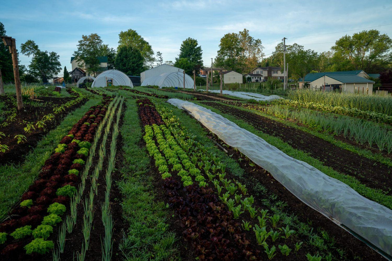 Rough Draft Farm