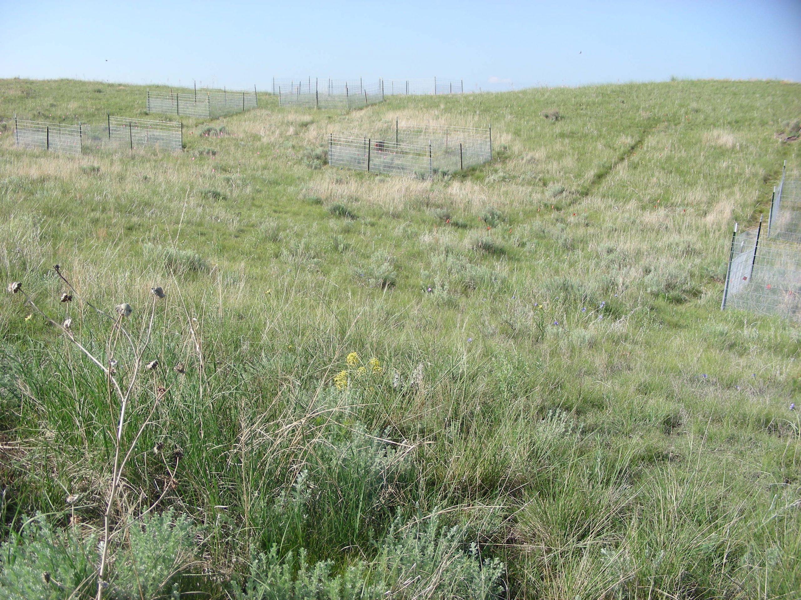nutnet_grassland_study