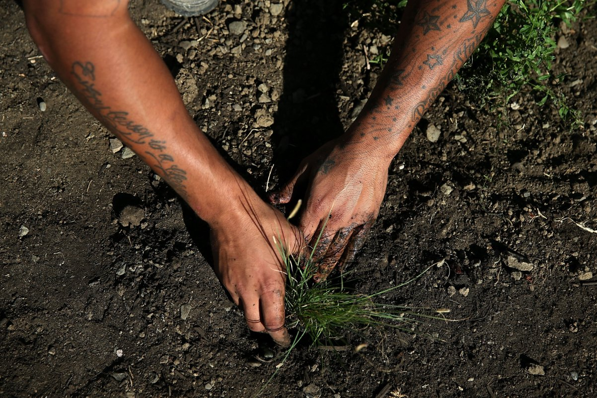 An incarcerated person installs a drought-tolerant garden in the prison yard.