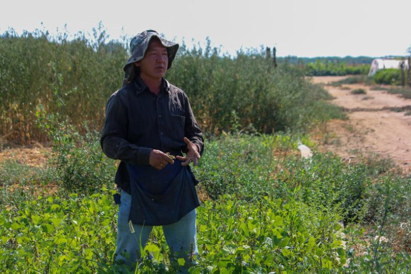 Small farmer Wisher Young on his farm in Fresno. (Photo courtesy of the Asian Business Institute and Resource Center)