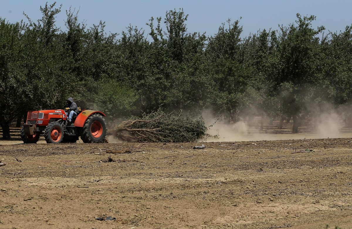 A worker uses a tractor to pull an uprooted almond tree at a farm near Mendota, California. As the California drought continues, Central California farmers are hiring well drillers to seek water underground for their crops.
