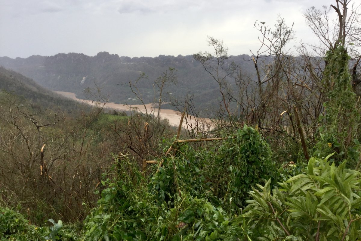 A landscape photo of the area around the author's farm after Hurricane Maria.