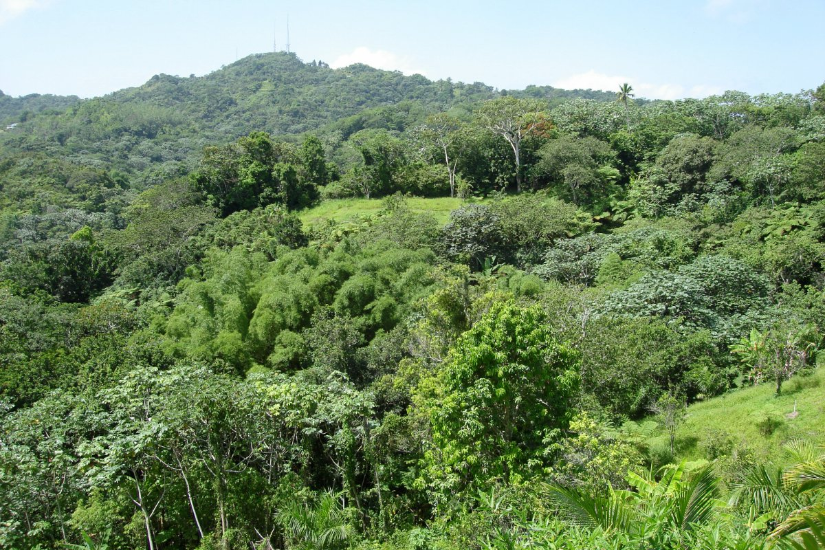 A landscape photo of the area around the author's farm before Hurricane Maria.
