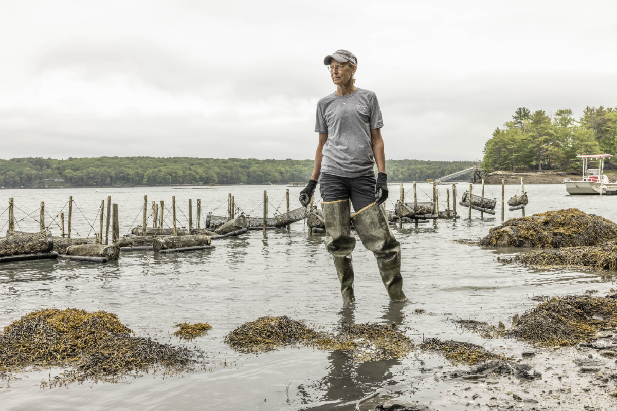 Barbara Scully, a pioneer in aquaculture, has transitioned from oyster farming to raising wild oysters, using a slower method that fosters the growth and harvest of oysters along the seaweed-covered edges of the tidal Damariscotta River.