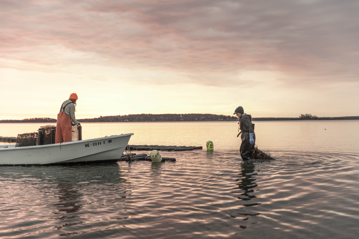 Emily Selinger, right, and Amanda Moeser, both raise oysters in the tidal flats of Casco Bay. While they each have their own companies, they often collaborate and support one another.