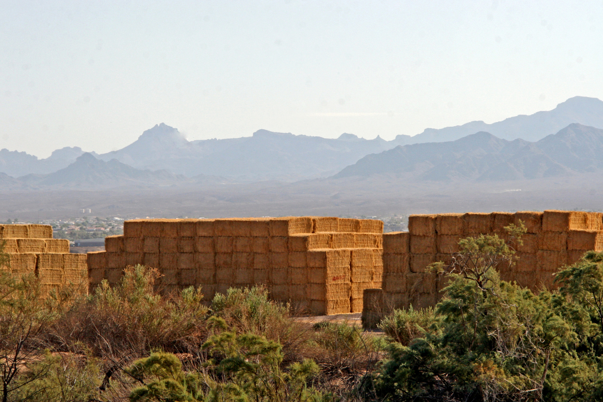 Stacks of rectangle hay bales stacked high in the Mohave Valley Arizona