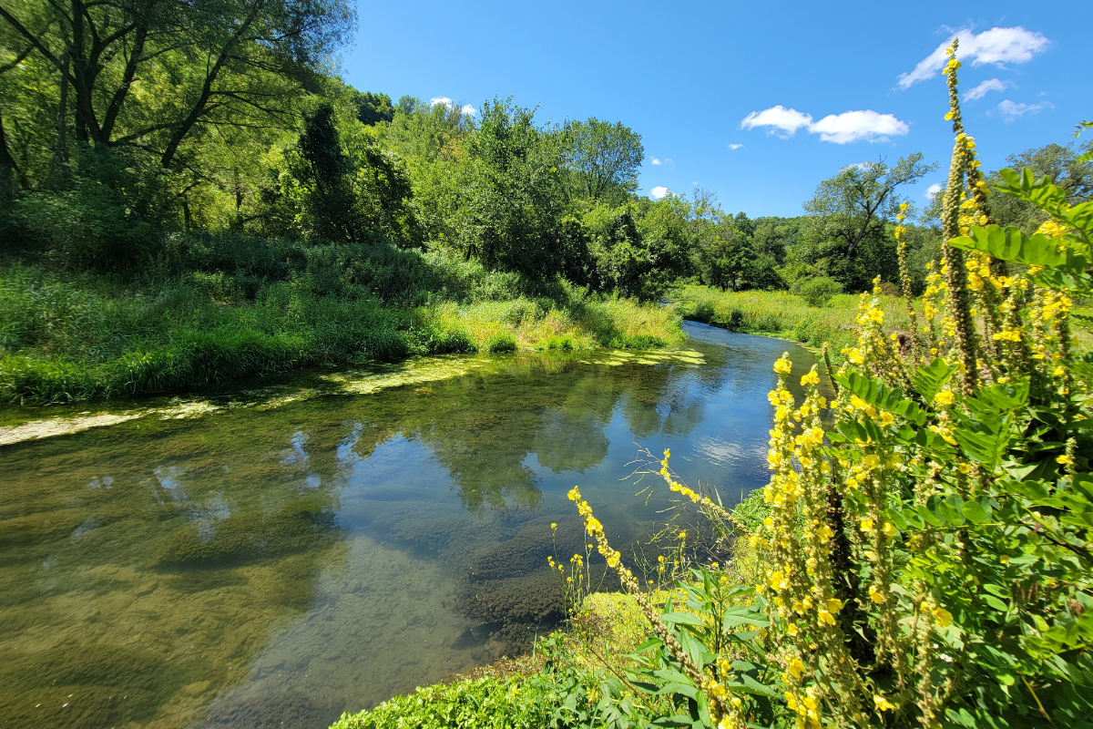 Bloody Run Creek in Iowa is home to both a naturally reproducing brown trout population and an annually stocked rainbow and brook trout population by Iowa DNR.
