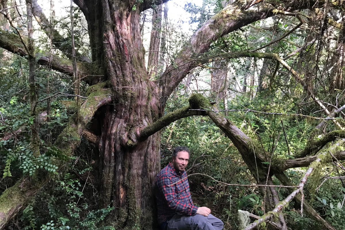 Sitting at the foot of a mother yew tree. (Photo courtesy of Megan Mucioki)